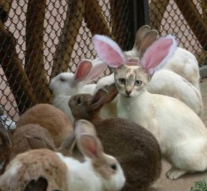 Não leve gato por lebre.