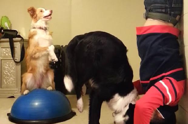treinar_cachorro_2_saudenarotina